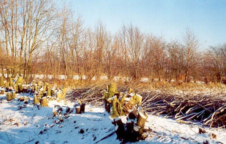Stubben im Schnee
