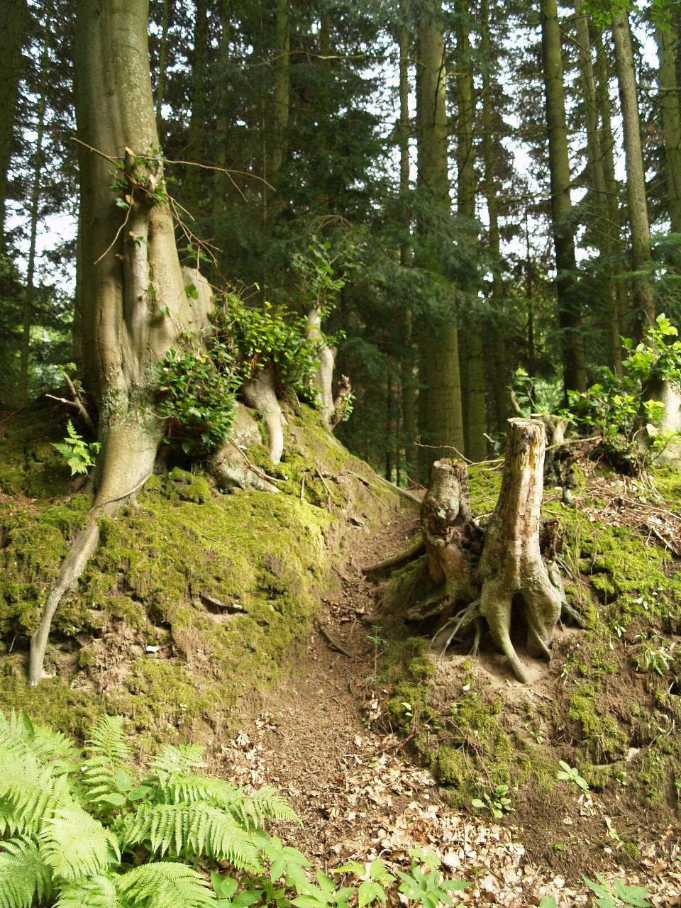Einstieg zum Totenberg am Weg