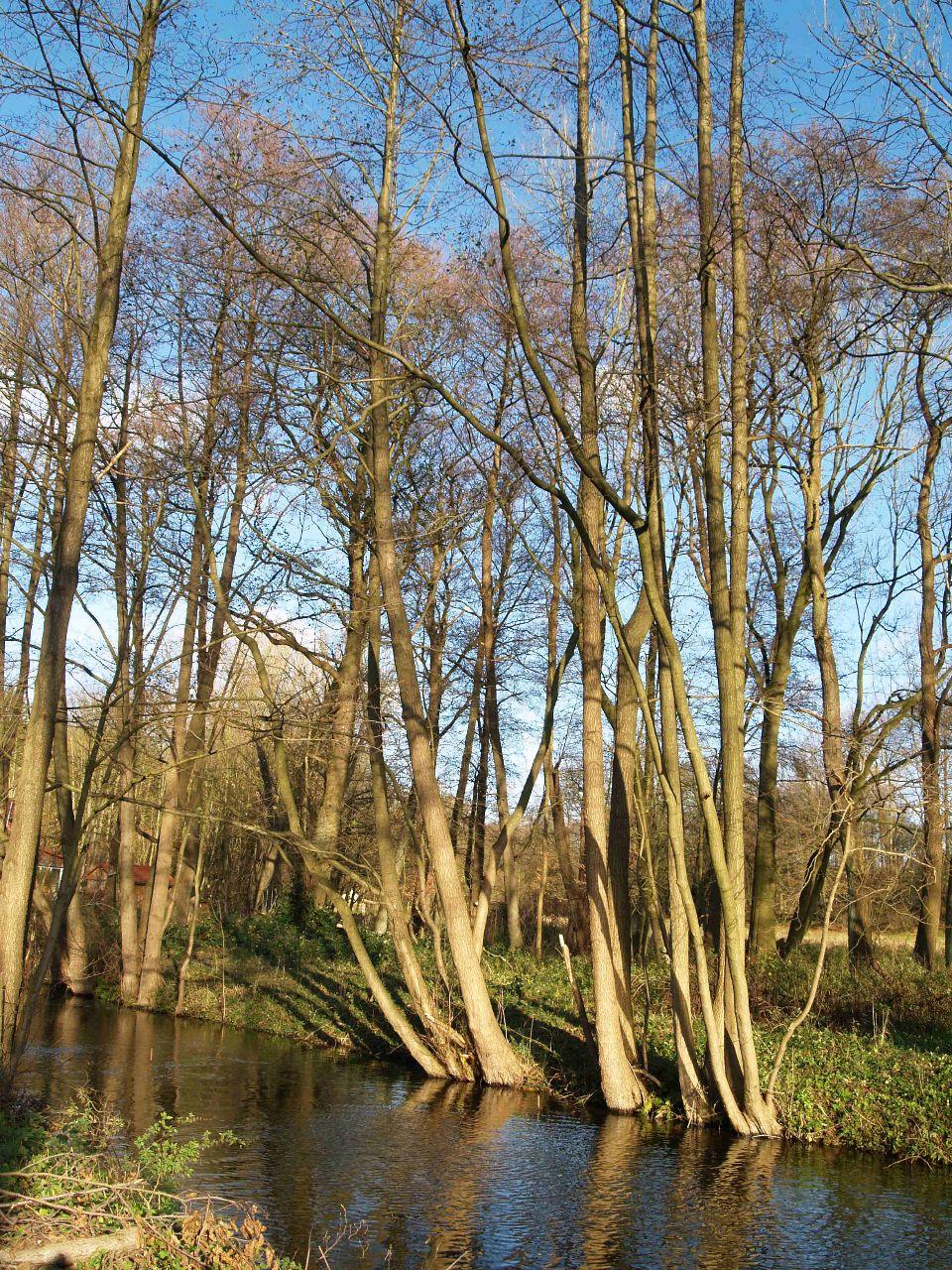 Bäume am Ufer des Ausflusses