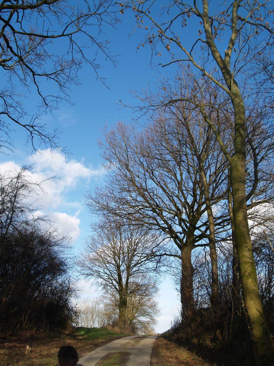 Blauer Winterhimmel über dem Spurplattenweg