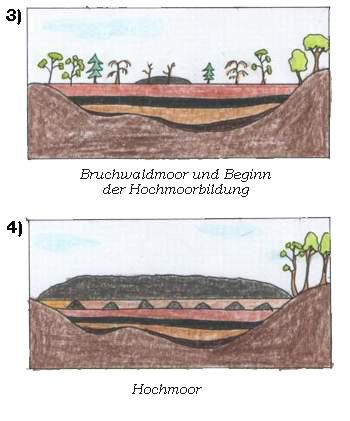 Entwicklung Hochmoor