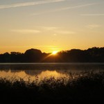 Gänse über der aufgehenden Sonne