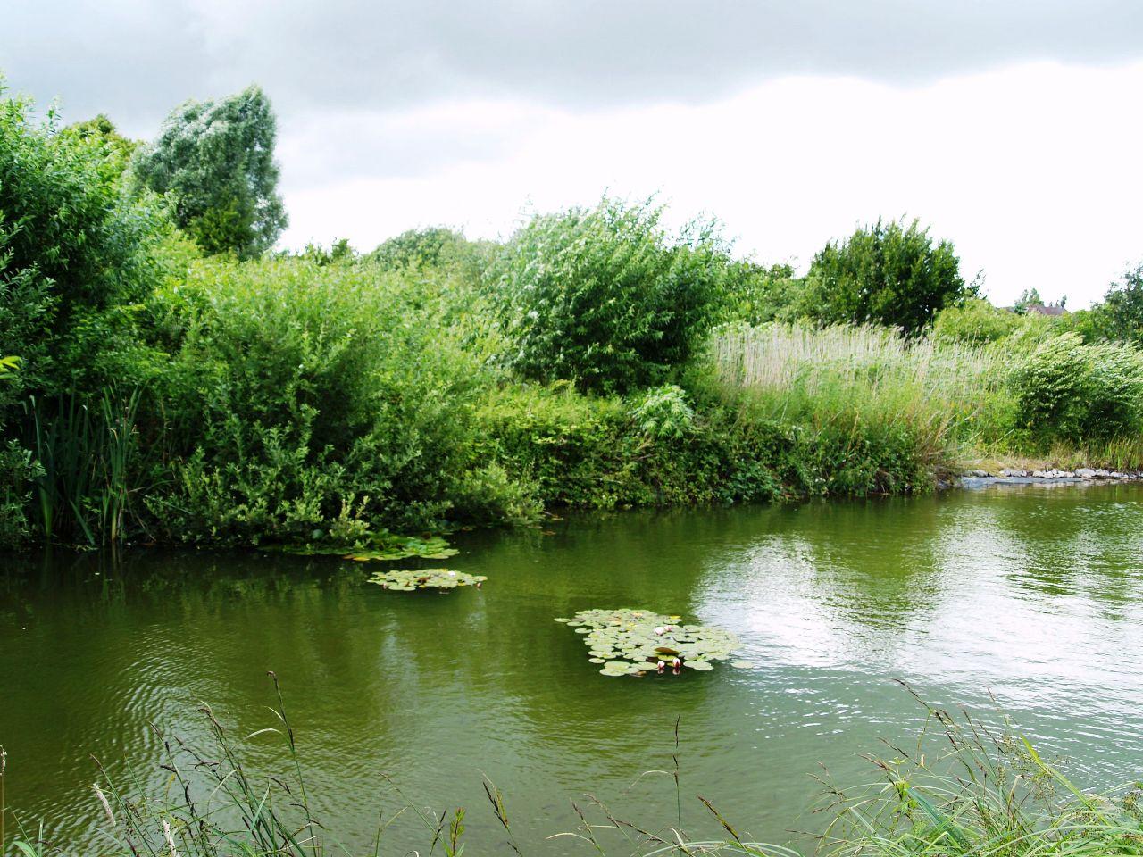 Großer Teich