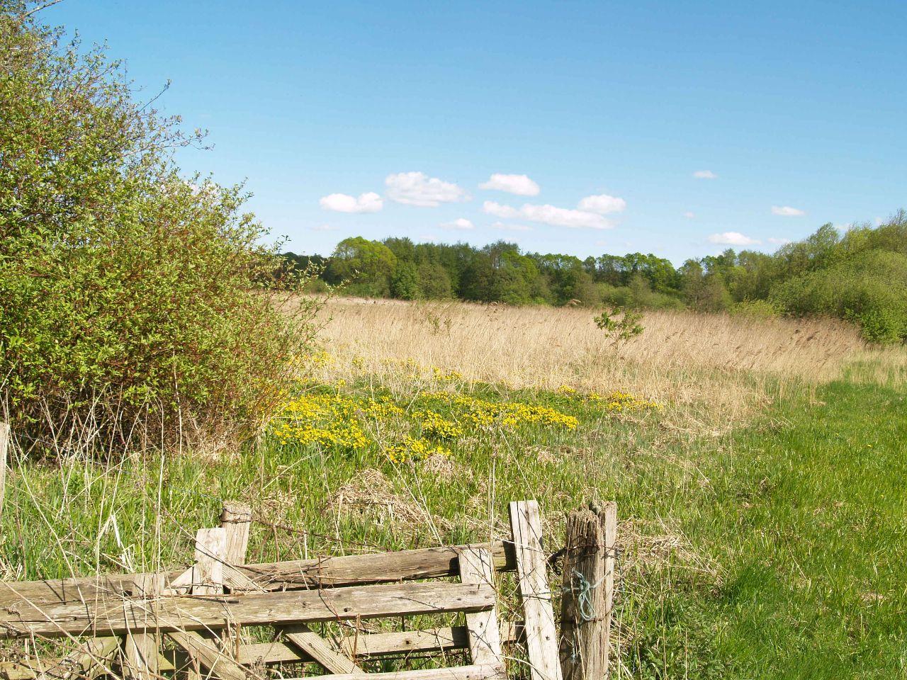 Stolper Moor im Mai