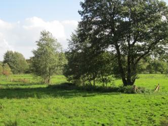 Stolper Moor September 2011