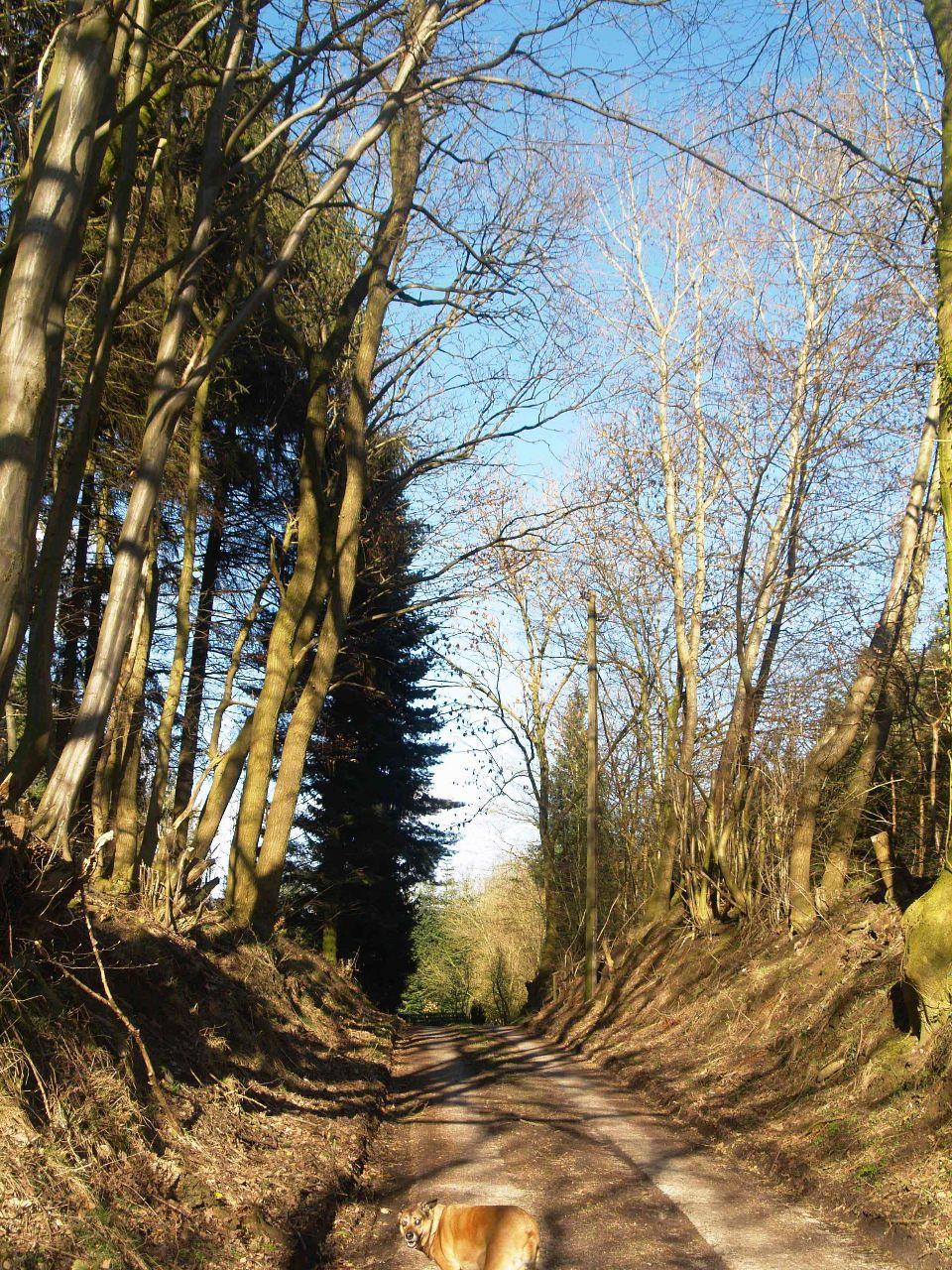 Spurplattenweg zwischen Buchen