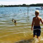 Ungerührt schwimmen die zahmen Graugänse unter den Badenden