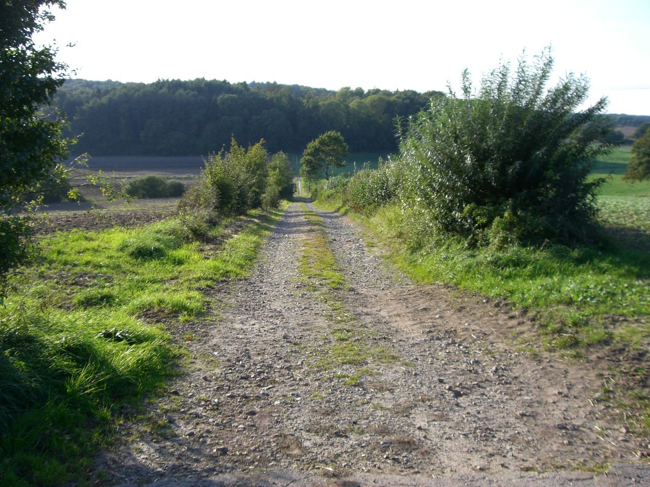 Weg zum Schlatenhorst