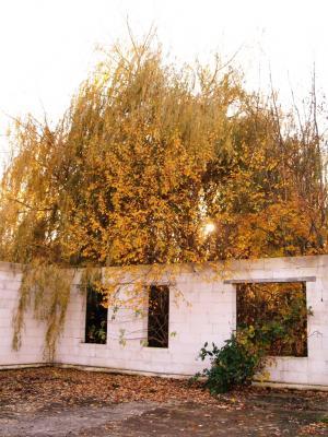 Bundhorst - Idyllische Ruine des ehemaligen Pferdestalls