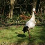 Storch Horstie begutachtet den falschen Storch.