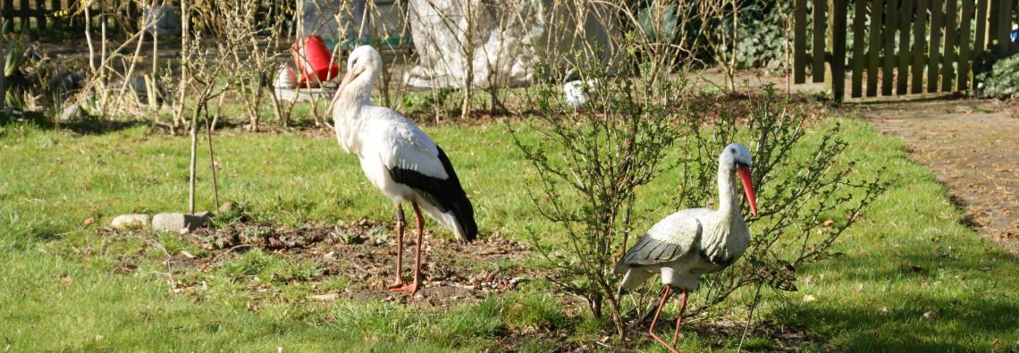 Storch Horsti begegnet neugierig einem Storch aus Plastik.