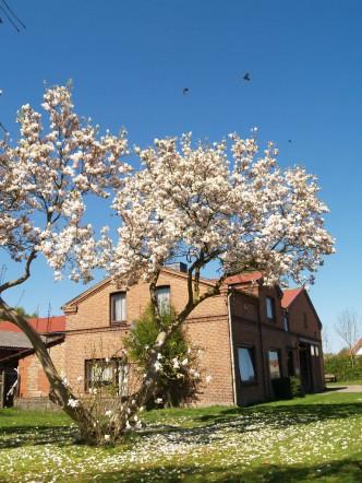 Böttiger Hof im Frühling