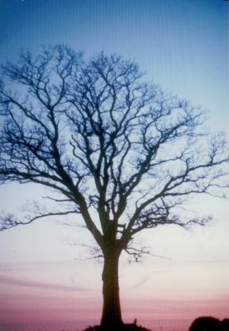 Mein toter Baum