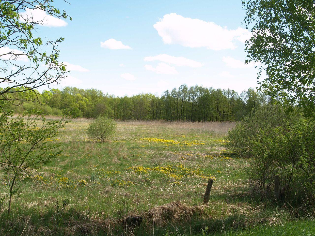 Blick ins Stolper Moor im Mai
