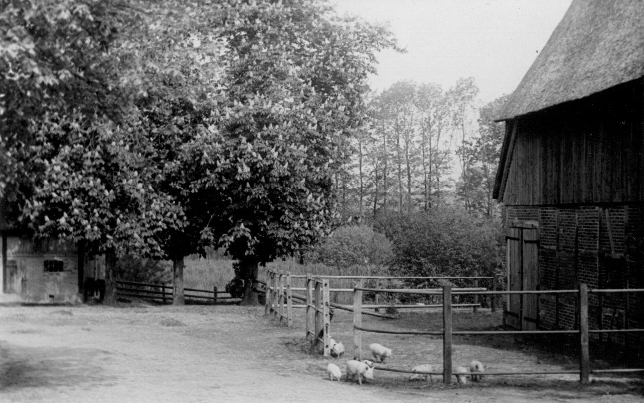 Ferkel am alten Pferdestall