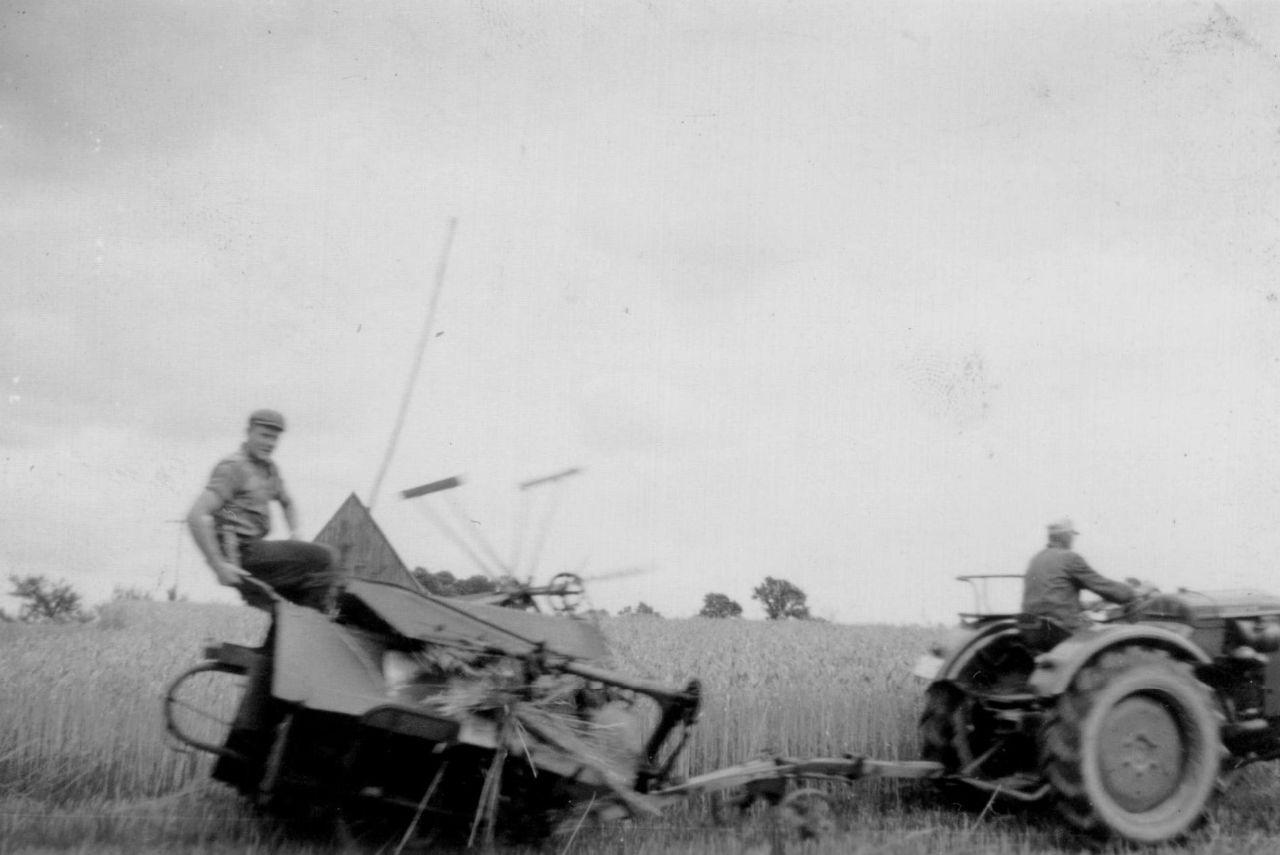 Beim Weizenmähen 1957