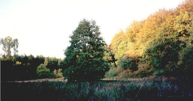 Alte Badewiese am Mühlenberg