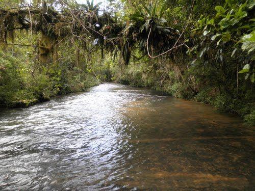 Rio Wiegand