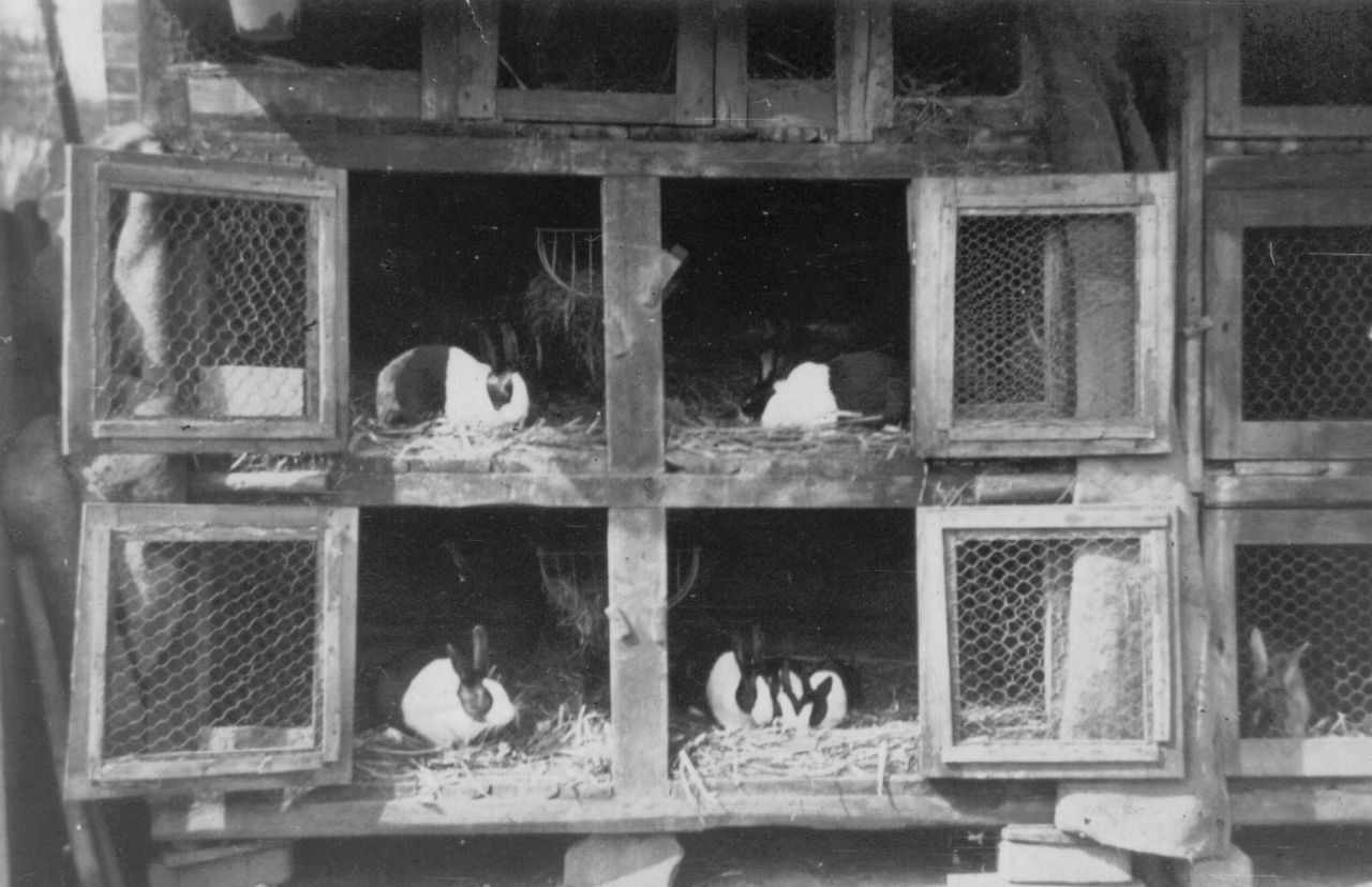 Kaninchenstall am Jägerhaus