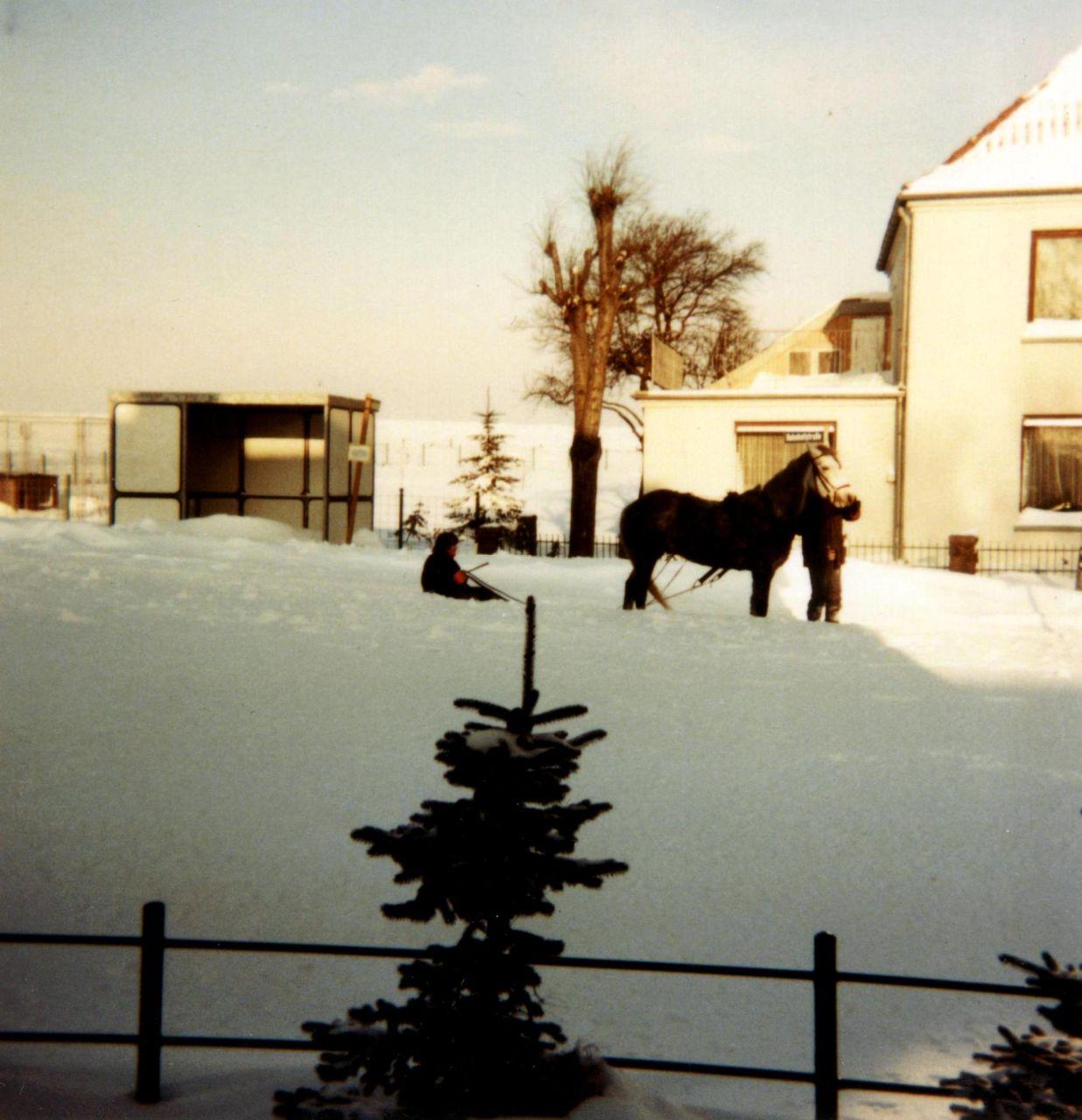 Pferd mit Schlitten