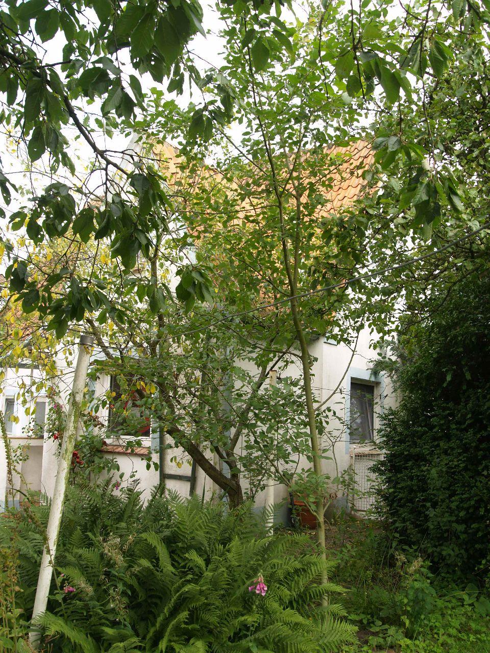 Das Haupthaus Heiratsberg Nr. 9