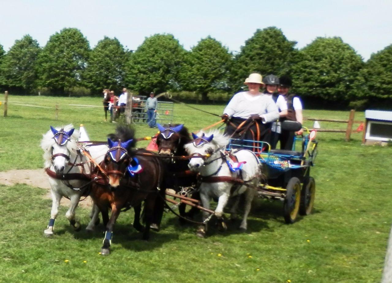 Vier-Spänner Ponys
