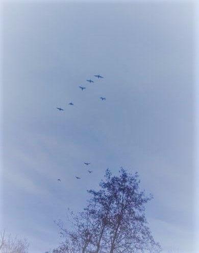 Fliegende Gänse
