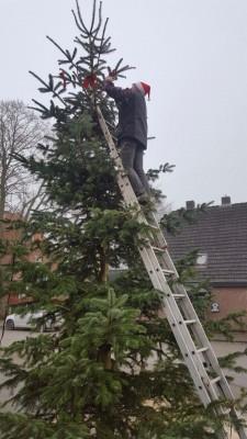 4 Der Baum ist hoch